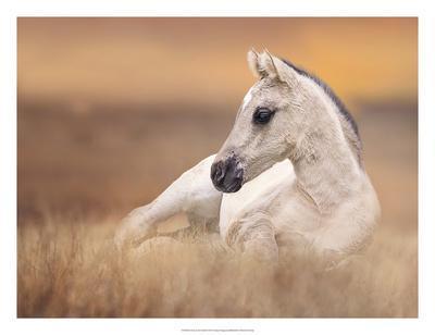 Foal in the Field II