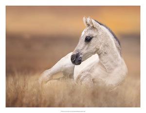 Foal in the Field II by Ozana Sturgeon