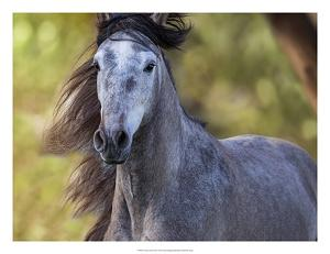 Horse in the Field I by Ozana Sturgeon