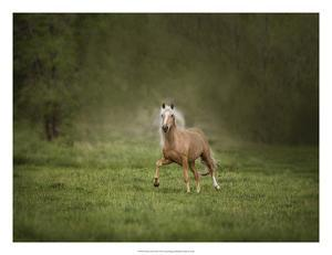 Horse in the Field II by Ozana Sturgeon