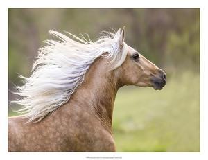 Horse in the Field III by Ozana Sturgeon