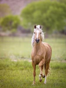 Horse in the Field VI by Ozana Sturgeon