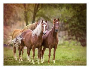 Horses in the Field I by Ozana Sturgeon