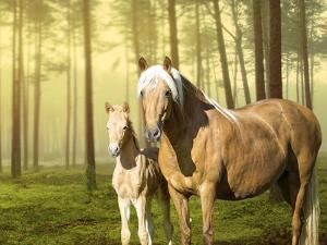 Horses in the Field II by Ozana Sturgeon