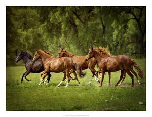 Horses in the Field III by Ozana Sturgeon