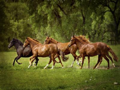 Horses in the Field III