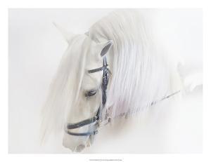 Purebred III by Ozana Sturgeon