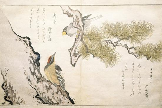P.332-1946 Vol.1 F.3 Hawfinch and a Woodpecker, from an Album 'Birds Compared in Humorous Songs',…-Kitagawa Utamaro-Giclee Print