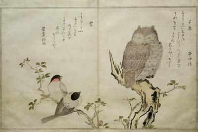 https://imgc.artprintimages.com/img/print/p-332-1946-vol-2-f-4-an-owl-and-two-eastern-bullfinches-from-an-album-birds-compared-in_u-l-plcba80.jpg?p=0