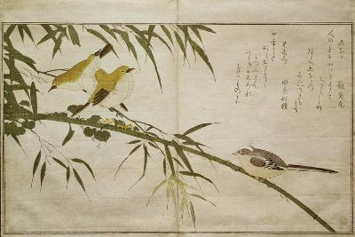 P.332-1946 Vol.2 F.6 Long-Tailed Tit and Three White Eyes, from an Album 'Birds Compared in?-Kitagawa Utamaro-Giclee Print