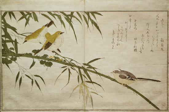 P.332-1946 Vol.2 F.6 Long-Tailed Tit and Three White Eyes, from an Album 'Birds Compared in…-Kitagawa Utamaro-Giclee Print