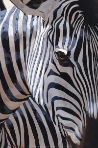 Zebra Stripes by P^ Charles