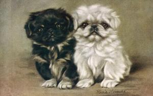 Black and a White Pekingese Puppy Sit Close Together by P. Kirmse