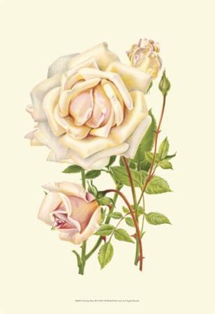 Victorian Rose III by P^ Seguin-Bertault