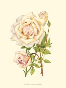 Victorian Rose III by P. Seguin-Bertault
