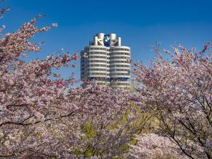 Blossoming Cherry Trees in Olympic Park in Munich, Bavaria, Germany, Europe by P. Widmann