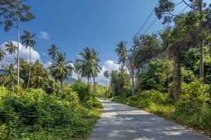 Country Road by Luxuriant Vegetation on Ko Samui, Thailand, Asia by P. Widmann