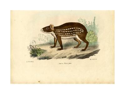 Paca, 1863-79-Raimundo Petraroja-Giclee Print