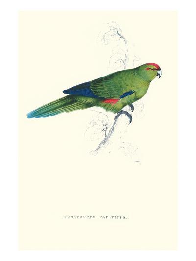 Pacific Parakeet - Cyanorhamphus Novaevelandiae-Edward Lear-Art Print
