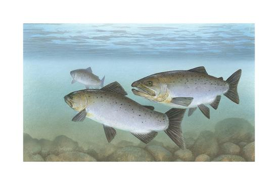 Pacific Salmon--Giclee Print
