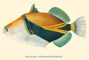 HumuHumu (Balistapus Rectangulus) - Hawaiian Reef Triggerfish by Pacifica Island Art