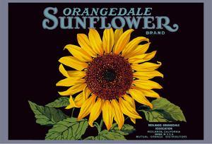 Orangedale Sunflower Brand - California Oranges by Pacifica Island Art