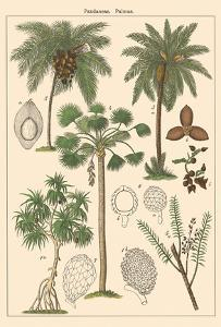 Screw-Pine Tree (Pandaneae) - Palm Trees (Palmae) by Pacifica Island Art