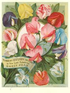 Packet of Sweet Pea Seeds