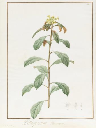 https://imgc.artprintimages.com/img/print/paeonia-moutan-var-b-paeonia-suffruticosa_u-l-purgtj0.jpg?p=0