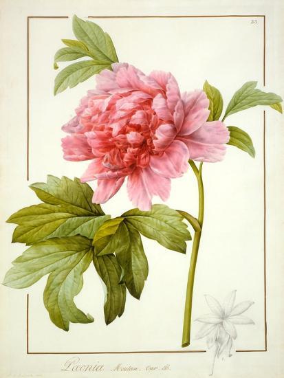 Paeonia Suffruticosa, 1812 (W/C with Gum Arabic over Traces of Graphite on Vellum)-Pierre Joseph Redoute-Giclee Print