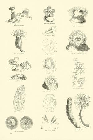 https://imgc.artprintimages.com/img/print/page-from-the-pictorial-museum-of-animated-nature_u-l-ppnm9o0.jpg?p=0