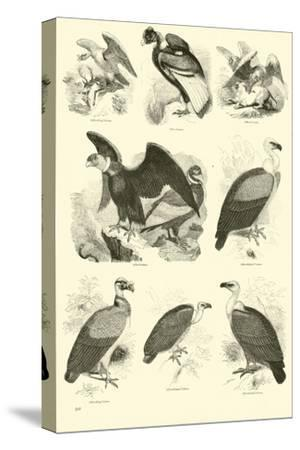Page from the Pictorial Museum of Animated Nature