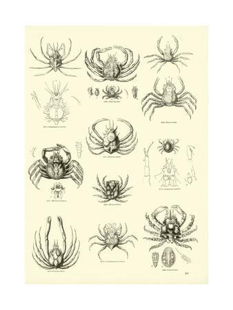 https://imgc.artprintimages.com/img/print/page-from-the-pictorial-museum-of-animated-nature_u-l-ppntcm0.jpg?p=0