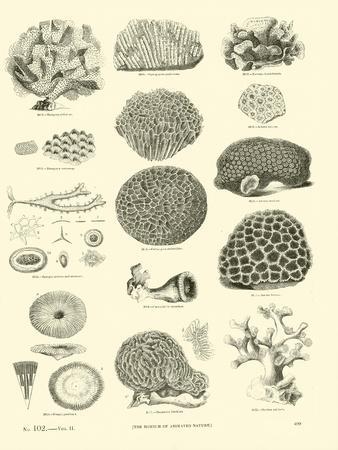 https://imgc.artprintimages.com/img/print/page-from-the-pictorial-museum-of-animated-nature_u-l-ppnyjx0.jpg?p=0