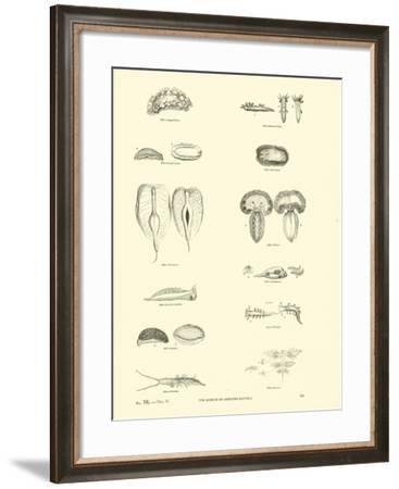 Page from the Pictorial Museum of Animated Nature--Framed Giclee Print