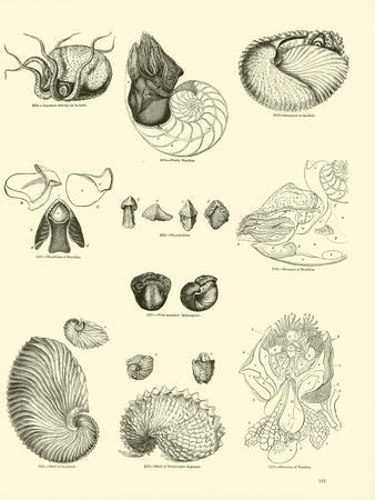 https://imgc.artprintimages.com/img/print/page-from-the-pictorial-museum-of-animated-nature_u-l-ppo8zd0.jpg?p=0