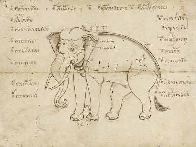 Page of a Manuscript on Elephant Training, Early 20th Century--Giclee Print