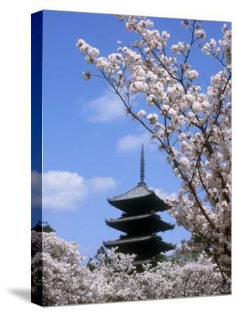 Pagoda of Ninnaji Temple and Cherry Blossoms