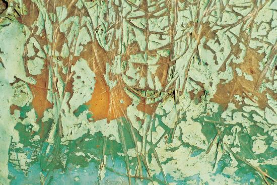 Paint and Fibres on Wood--Photographic Print