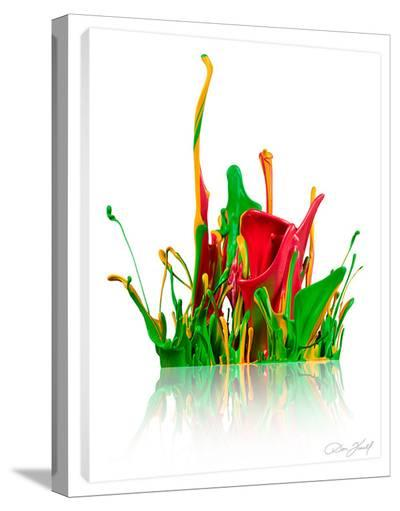Paint Blossom Red-Don Farrall-Stretched Canvas Print