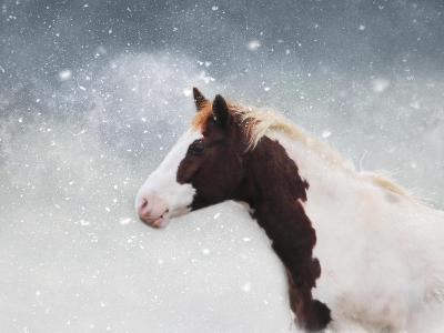 Paint Horse in the Snow-Jai Johnson-Giclee Print