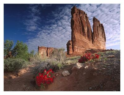 Paintbrush and the Organ Rock, Arches National Park, Utah-Tim Fitzharris-Art Print