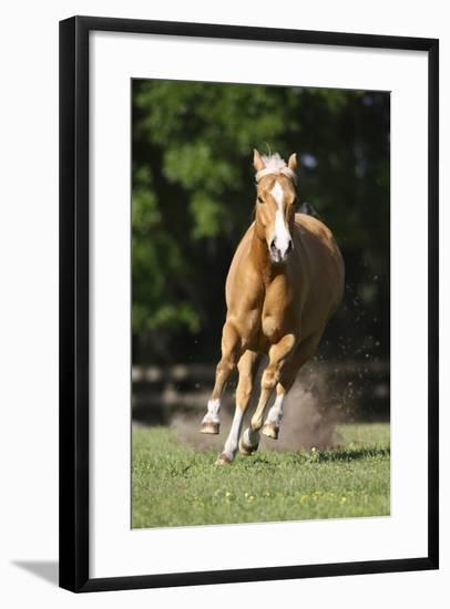 Painted 038-Bob Langrish-Framed Photographic Print