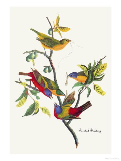 Painted Bunting-John James Audubon-Art Print