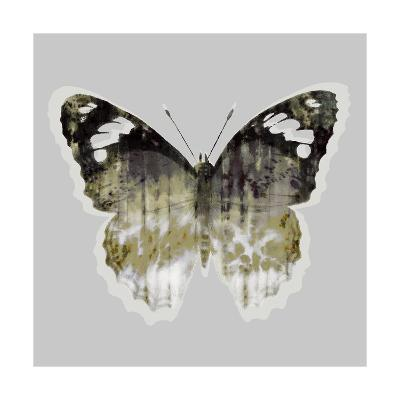 Painted Butterfly 1-THE Studio-Premium Giclee Print