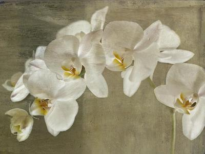 Painted Orchid-Symposium Design-Giclee Print