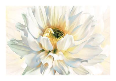 https://imgc.artprintimages.com/img/print/painted-petals-i_u-l-f6b21r0.jpg?p=0