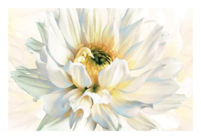 https://imgc.artprintimages.com/img/print/painted-petals-i_u-l-f6b21s0.jpg?p=0