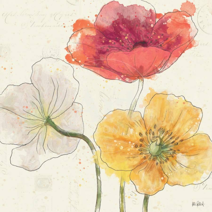 Painted Poppies V Art Print by Katie Pertiet | Art.com
