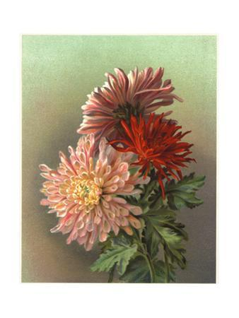 Painterly Chrysanthemums Bouquet